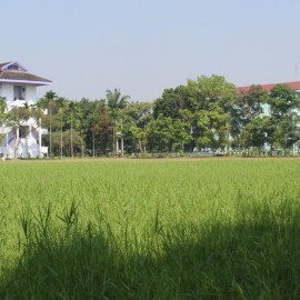 Universitas Medan Area Kelola Kampus Ramah Lingkungan